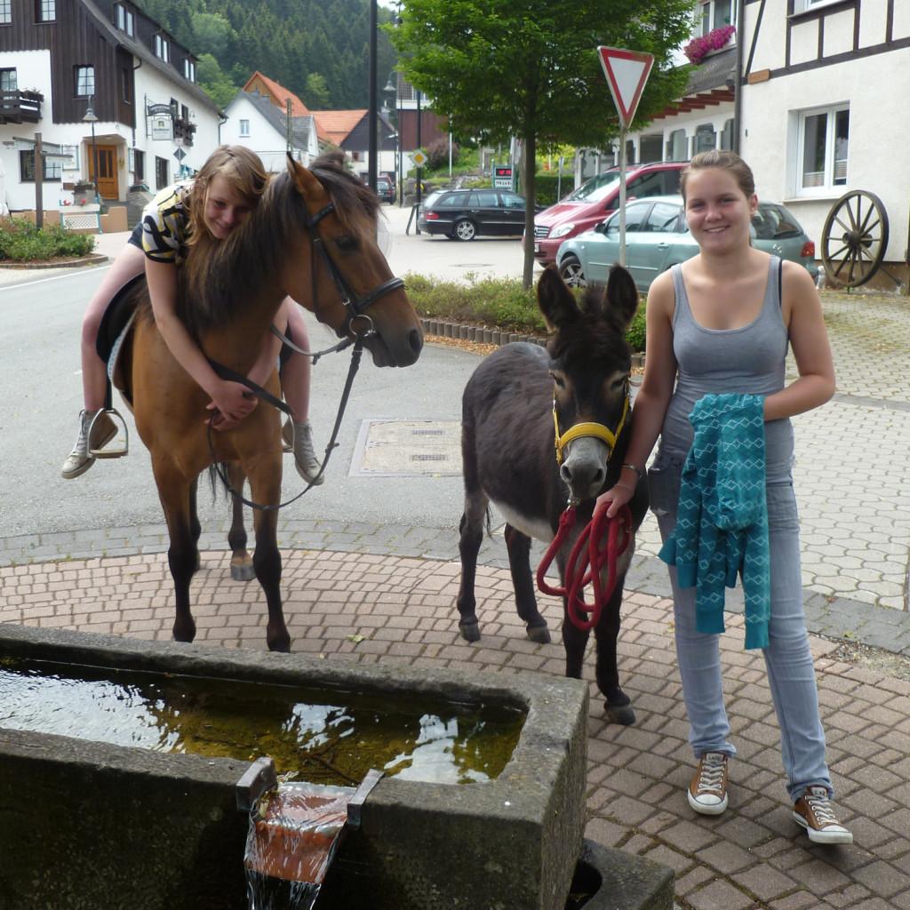 Pferde_und_Eselwanderung_2